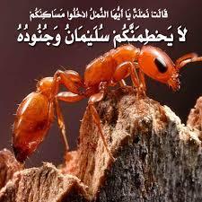 عندما يقتحم النمل منزلك ،، خاطبيه