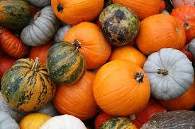 Image result for pumpkin varieties
