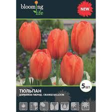 Тюльпан «Оранж <b>Баллун</b>» в Самаре – купить по низкой цене в ...