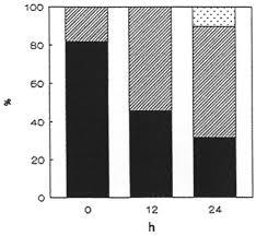 The pollinium of Loroglossum hircinum (Orchidaceae) between ...