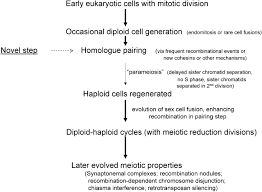 the evolution of meiosis from mitosis genetics conclusions