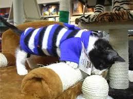 <b>Одежда для кошек</b> . Все О Домашних Животных. - YouTube