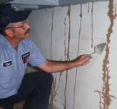 Image result for termites can even eat through a foundation