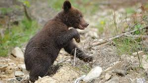 Под Магаданом медвежонок залез на <b>обеденный стол</b> к рыбакам