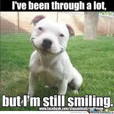 Smiling Dog Is Smiling by marluts - Meme Center via Relatably.com