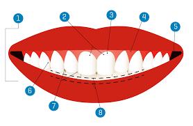 Znalezione obrazy dla zapytania smile teeth clipart