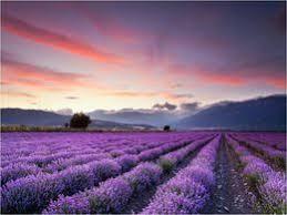 """Résultat de recherche d'images pour """"image fleurs des champs"""""""