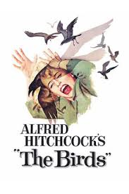 Image result for images the birds hitchcock