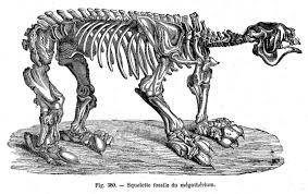 Image result for Megatherium