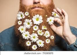 <b>Red Beard</b> Images, Stock Photos & Vectors | Shutterstock