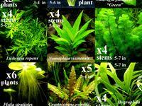 68 Best Aquarium images in 2019 | Fish tanks, Fish aquariums ...