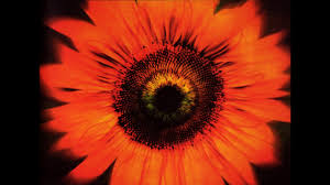 <b>Lacuna Coil</b> - <b>Comalies</b> [2004 Deluxe Edition] (Full Album) - YouTube