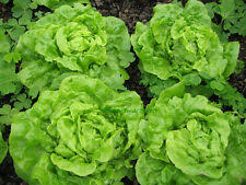 Cold Deciduous Vegetable <b>Plant Seeds</b> for sale | eBay