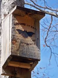 Bat House Plans   Tips For Building A Bat House And Attracting    bat house