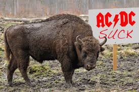 Report: Bison Hate <b>AC</b>/<b>DC</b> | MetalSucks