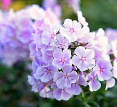 Small Picture 116 best GARDEN CUT FLOWERS images on Pinterest Flower gardening