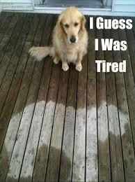 20 New Hilarious Dogs and Cats Memes - Dog Tutorial via Relatably.com