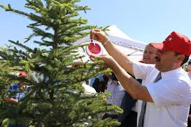 249 şehidin künyesi ağaçlara asıldı