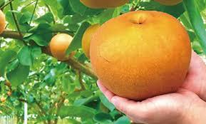 「にっこり 梨 」の画像検索結果