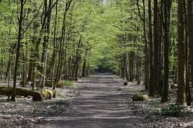 Kabaty Woods
