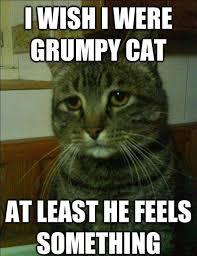 "Simon the Depressed Cat"" Is My New Favorite Meme - POPHANGOVER via Relatably.com"