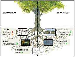 How tree roots respond to drought | Plant Science - Frontiers