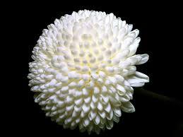 Resultado de imagen para flor blanca