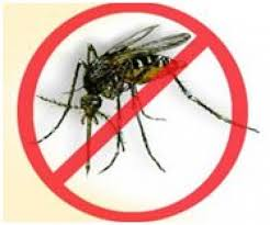 dengue on pregnancy