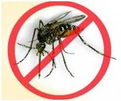 dengue on pregnancy