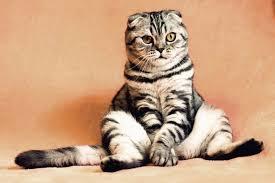 <b>Без кота</b> и работа не та: ТОП-8 известных проектов, которые не ...