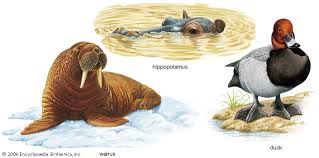 adaptation    Kids Encyclopedia   Children     s Homework Help   Kids     Kids Britannica Art Many animals have developed features to help them survive in their habitat  Hippopotamuses
