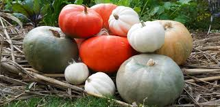 Don't toss it! 14 delicious uses for <b>Halloween pumpkins</b> ...