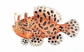 Antennarius striatus