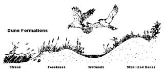 Image result for coastal dunes wetlands image