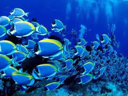 أكبر تجميع لأجمل صور من اعماق البحار (سبحان الله الخالق العظيم) Images?q=tbn:ANd9GcTkIhf16NZY-HygLAeh5aGLLN0lrVB84oQ3Cxs8_6rGP6jbo3cVRg