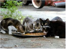 <b>Stray</b> vs Feral <b>Cats</b> – What you Need to Know - Furever Home ...