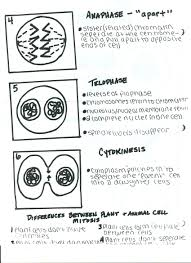 mitosis powerpoint notes ms connell mitosis notes page two