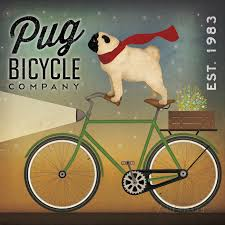 Image result for dog on a bike