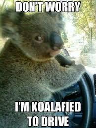 Koala Bear on Pinterest | Koala Bears, Koalas and Australian Animals via Relatably.com