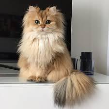 <b>Suki</b> The <b>Cat</b>