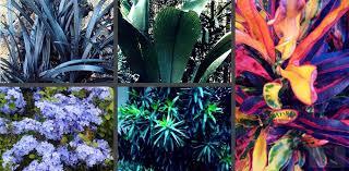 utopia landscape design brisbane landscaping ideas tropical plants brisbane office plants