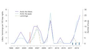 <b>COAT</b> Varanger Arctic <b>fox</b> module