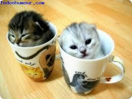 """Résultat de recherche d'images pour """"photo de chaton trop mignon"""""""