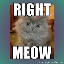 RIGHT MEOW - cute cat | Meme Generator via Relatably.com