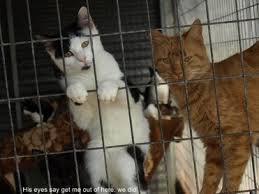 Image result for cats in pens