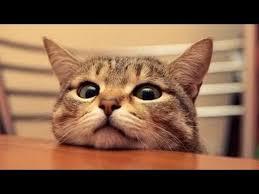 Gatos: el sexto sentido