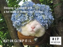 Catnip, Not Even Once! - Imgur via Relatably.com