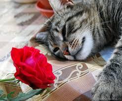 Imagini pentru gradina cu trandafiri