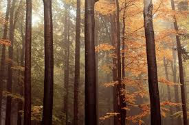 <b>Autumn Forest</b> Pictures | Download Free Images on Unsplash