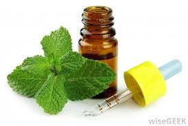 Image result for peppermint extract